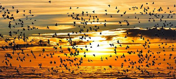 trekvogels singles vakantie