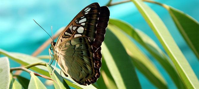 vlinder bloemreizen groep