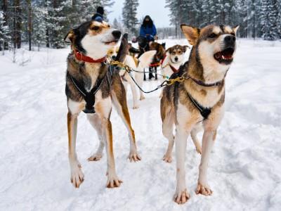 Groepsreis Finland: Lapland - 7 dagen; Winterparadijs in Lapland