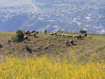 Groepsreis Georgië & Armenië; Waar de reiziger een gast is...