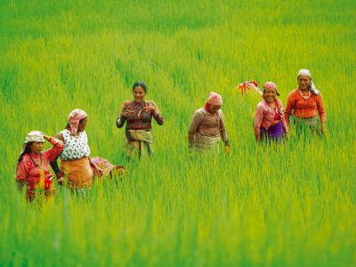 Groepsreis Nepal Avontuurlijk; Rondreis met Himalaya trektocht