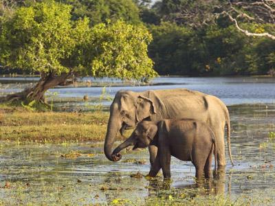 Groepsreis Sri Lanka; Tocht over een paradijselijk eiland