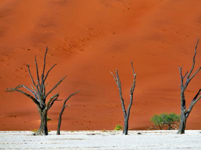 Groepsreis Zuidelijk Afrika in 3 weken; Kamperen tussen de nijlpaarden