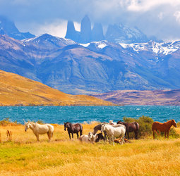 Groepsrondreis Patagonië