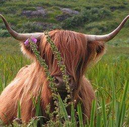 Groepsrondreis Schotland