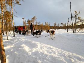 Singlereizen sprookjesachtig Lapland